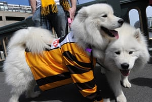 AFL Parade: Dogs dressed in Hawthorn jerseys