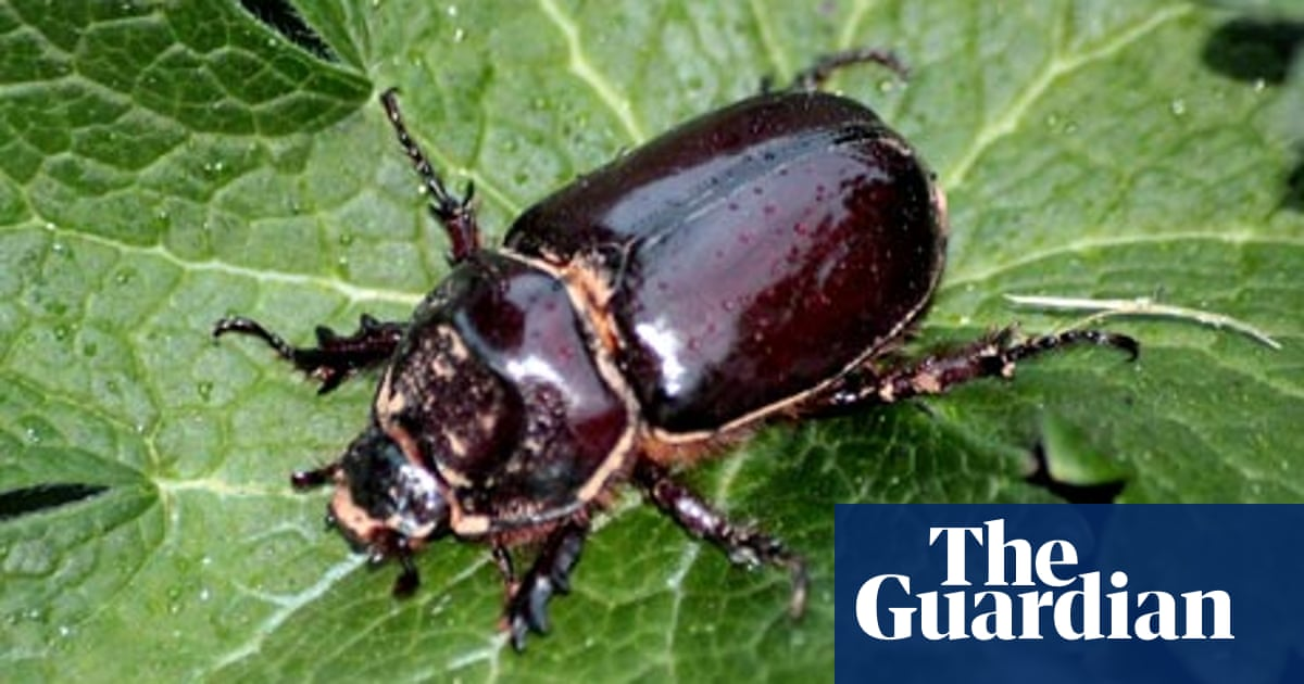 Beetle Mania Insects The Guardian
