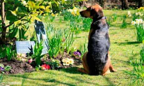Dog Mikey at crematorium