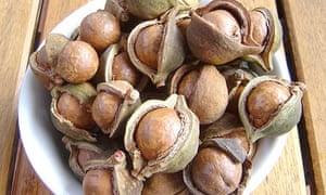 Macadamia: Australia's own hard nut to crack | Life and