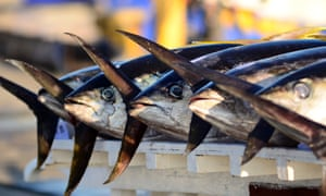 A pile of yellow fin tuna at a port during the 15th National Tuna Congress and Trade Exhibit in General Santos City.
