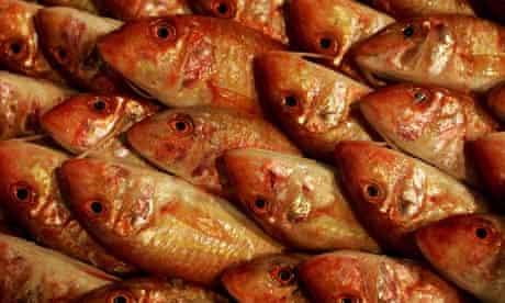 Fresh fish in Greece