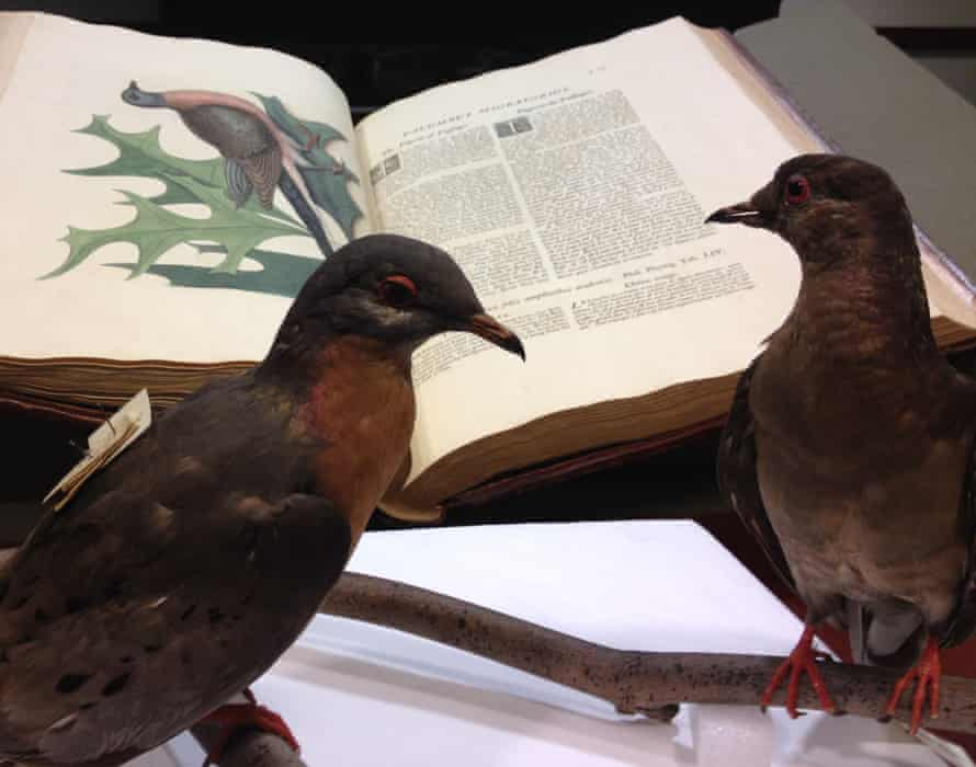 Martha reads up on passenger pigeons