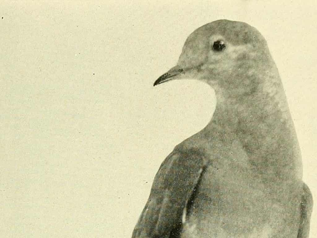 2014: the year of the passenger pigeon