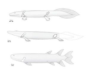 Evolution of tetrapods, from fish via Tiktaalik