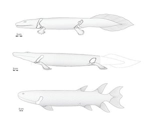Tiktaalik fossils reveal how fish evolved into four-legged