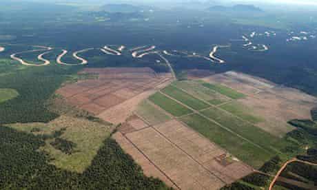 B Corp business environmental responsibility Borneo rainforest