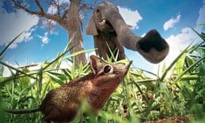 a sengi and elephant in Hidden Kingdoms