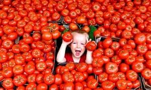 tomatoes veganism sustainable eating