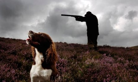 A gamekeeper aims his shotgun on a grouse estate on the Scottish Borders