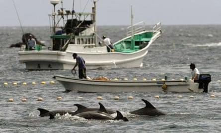 Dolphin hunters off Taiji
