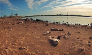 Dead fish lie in the dry silt of Lake Arrowhead, one of the prime sources of water for the City of Wichita Falls, Texas. The 2030 Water Resources Group are meeting in Davos today to discuss the importance of water for the post-2015 development agenda.