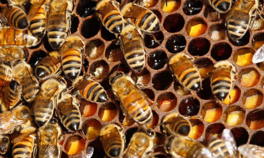 Bees, like sharks and Hadza hunter-gatherers, forage in a pattern called Levy walks.