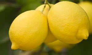 lemons for offices