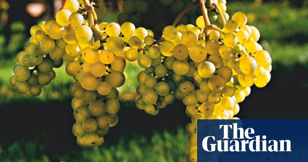Gardens Grapevines Life And Style The Guardian