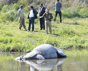 Week in Wildlife: Poachers Kill Another Rhino In Assam, India