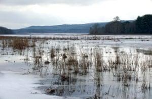 Week in Wildlife: Basha Kill wetlands