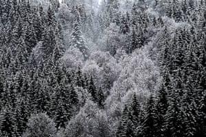 Week in Wildlife: Fresh snow on higher elevations in Bavaria