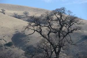 Week in Wildlife: A dead tree is seen against a barren lan