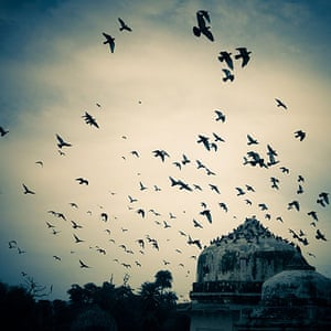 Pigeons in Alwar, India