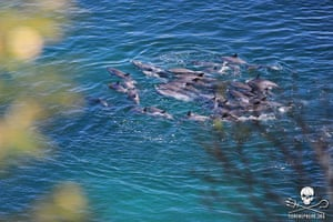 Week in wildlife: Pantropical Spotted dolphins in the killing cove of Taiji