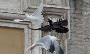 Crow chases dove