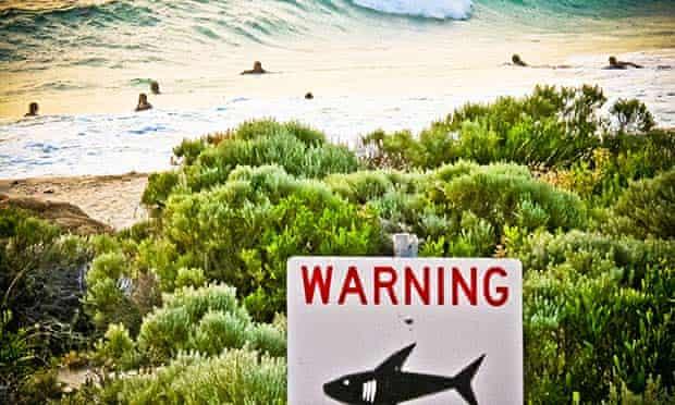 Shark western australia