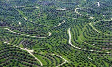 Palm oil plantations in Indragiri Hulu