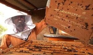 Beekeeper, Tigray, Ethiopia
