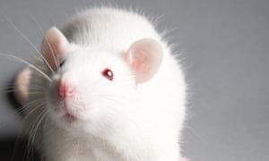 Animal research can be justified – but 'cuteness' is