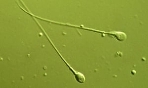 sperm servive Male