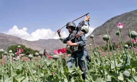 Armed Afghan police officers destroy an opium poppy field in Kunar province