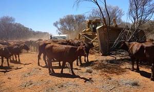 Springvale drought Australia