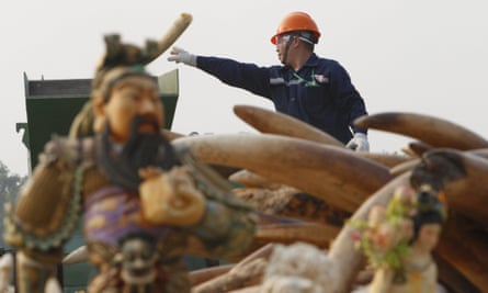 Customs authorities destroy 6.1 tons of illegal ivory, Dongguan, Guangdong, China