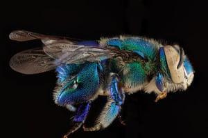 Macro bees: Macro photograph of bee #5