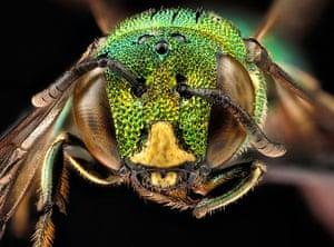 Macro bees: Macro photograph of bee #9