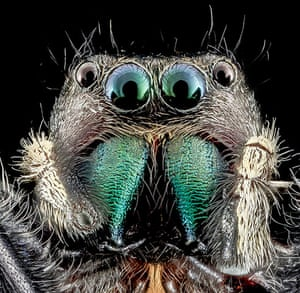 Macro bees: Macro photograph of spider