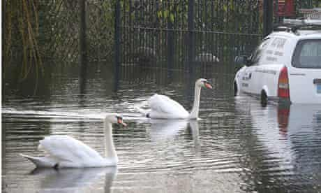 Chertsey, Surry, floods and swans