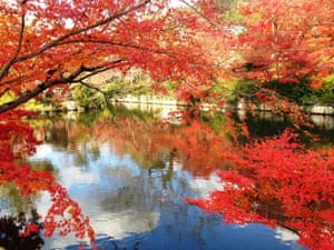 Pond and maple leaves at Eikando temple, Kyoto