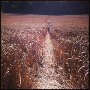 Walking through corn fields on the Sussex South Downs