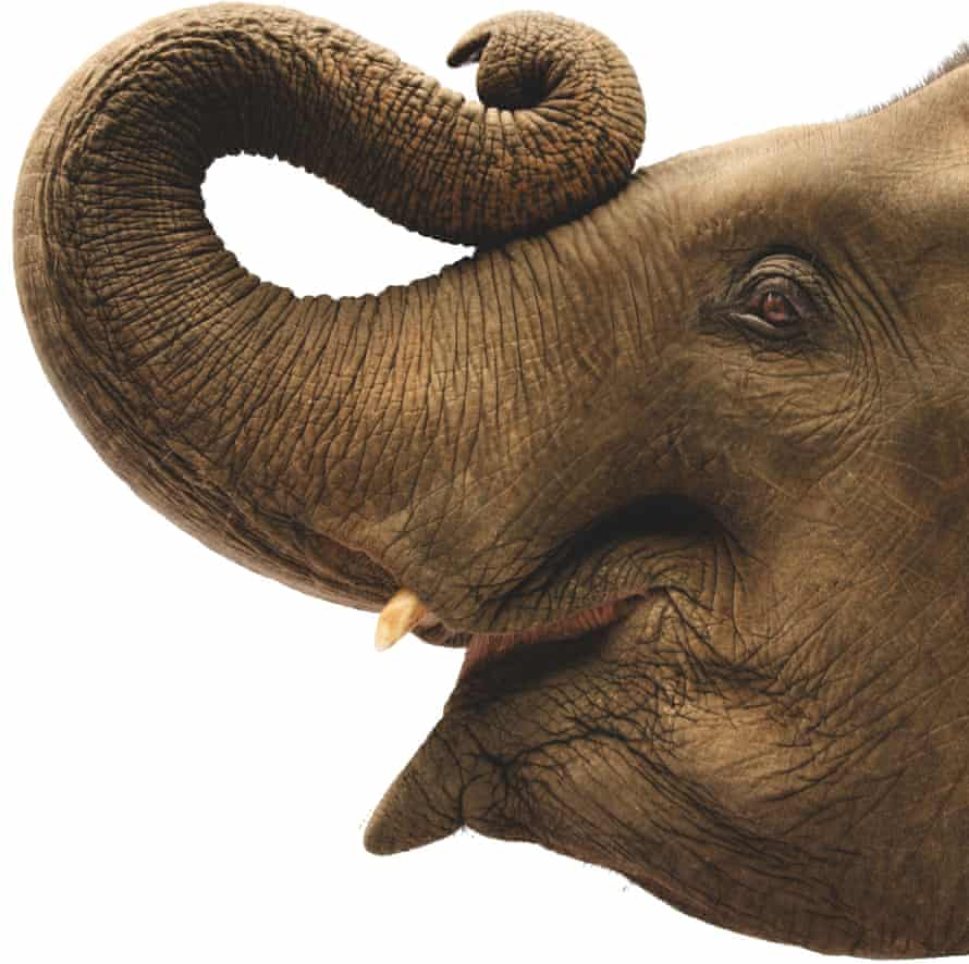 elephant's face and trunk