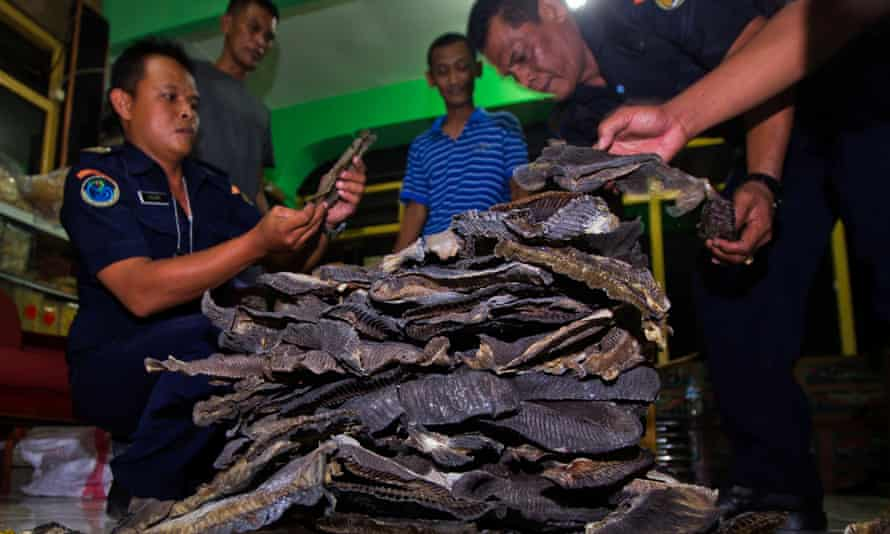 Officials holding sezied manta ray gills in Indonesia