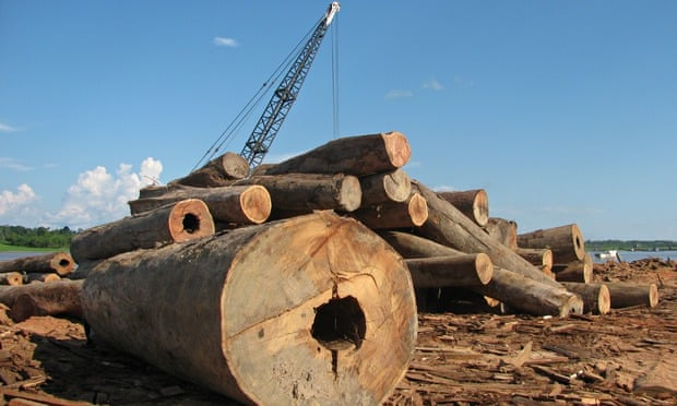 Illegal loggers remain hidden in Peru's forest but timber