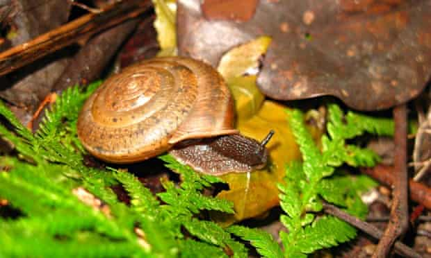 A new species of snail named in celebration of gay marriage
