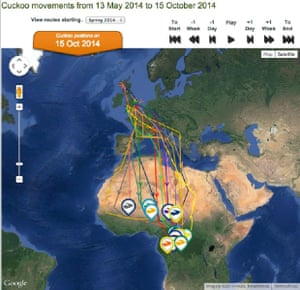 BTO cuckoo-tracking project