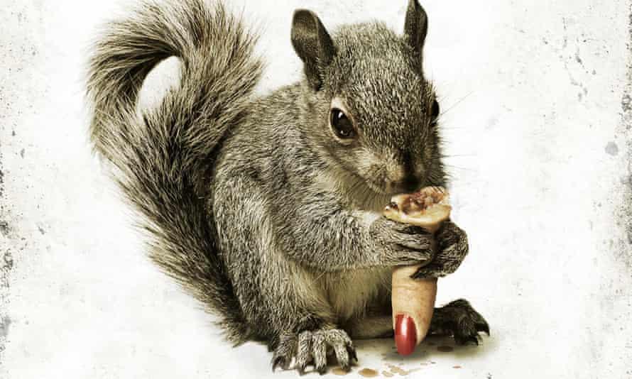 Squirrels film poster.