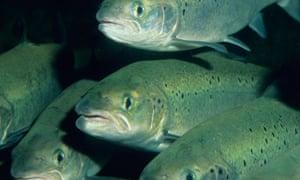 Fish farm in Chile
