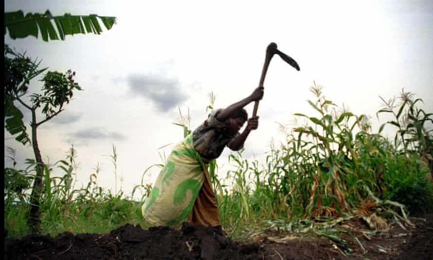 Farmer Liziness Limunga digging her plot of land in Nambuma district, Malawi