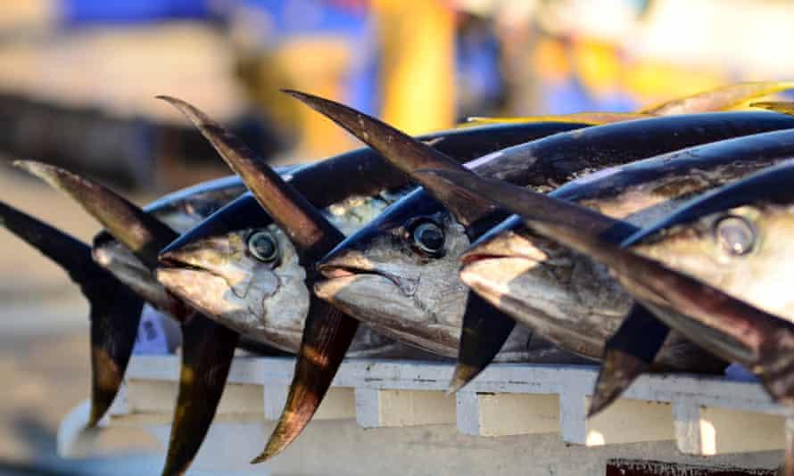 A pile of yellow fin tuna
