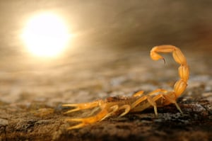 10 Years and under winner and Winner & Overall young Wildlife Photographer of the Year : Stinger in the sun by Carlos Perez Naval  (Spain)